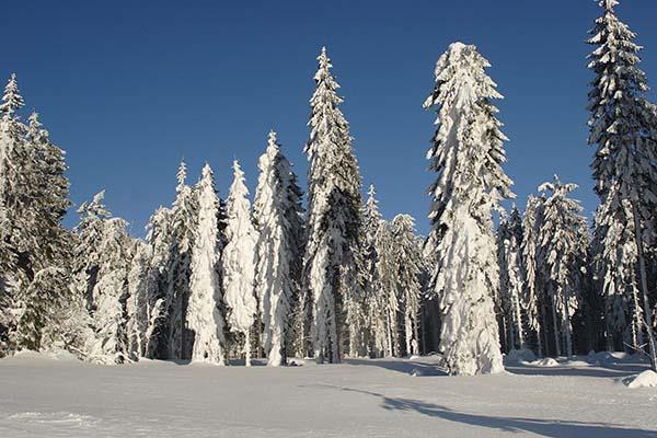 Winterlandschaft 600x400